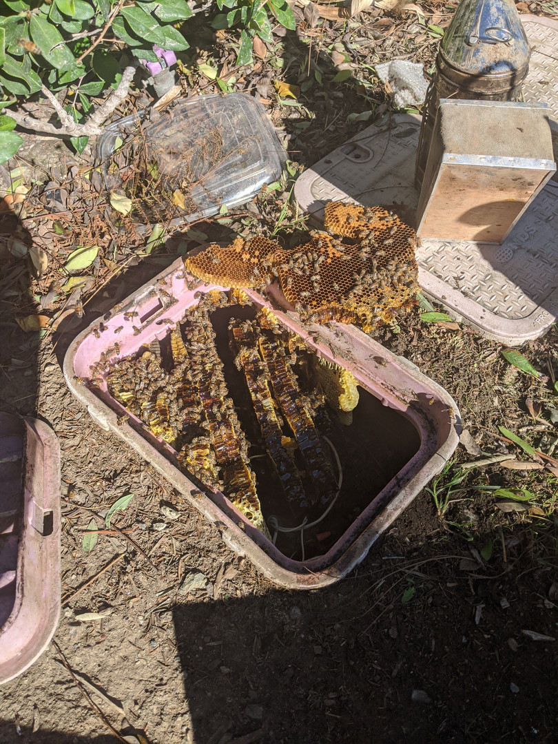 Irrigated Bees.