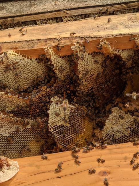 Honeycomb inside a roof.