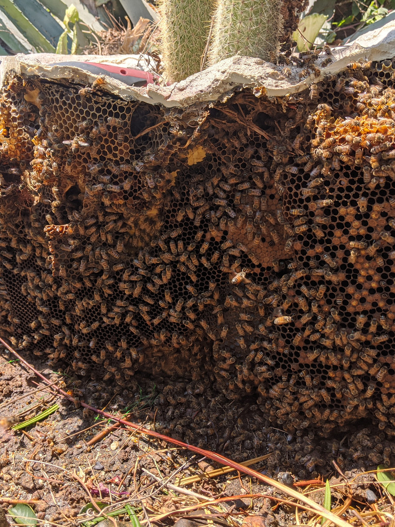 A planter full of Bees.