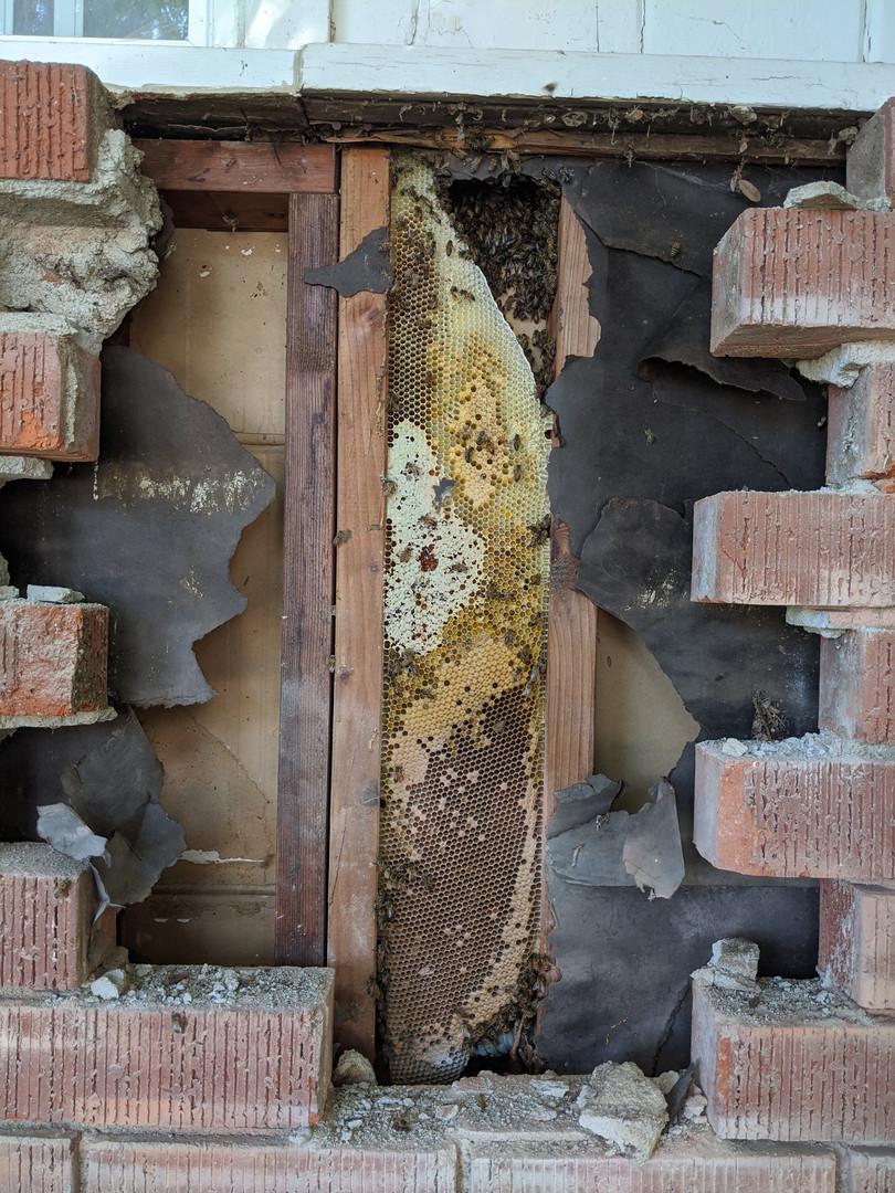 Bees Behind Brick.
