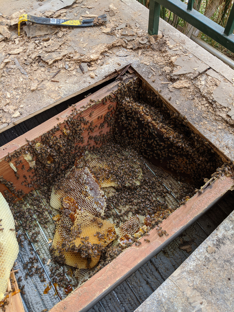 Bees under A Deck Pt. 2