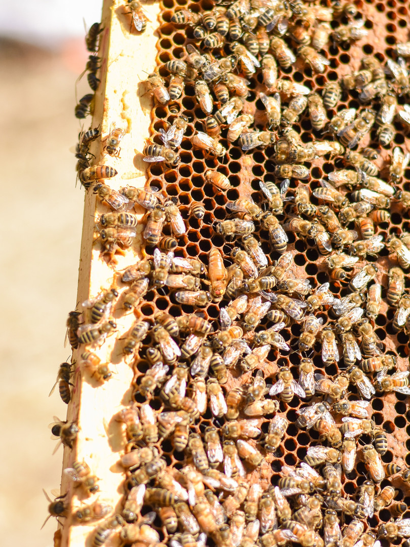 Many bees!