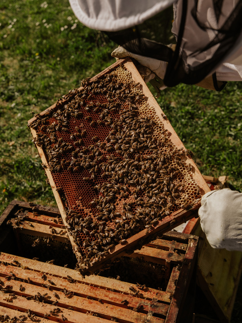A routine Hive Inspection.