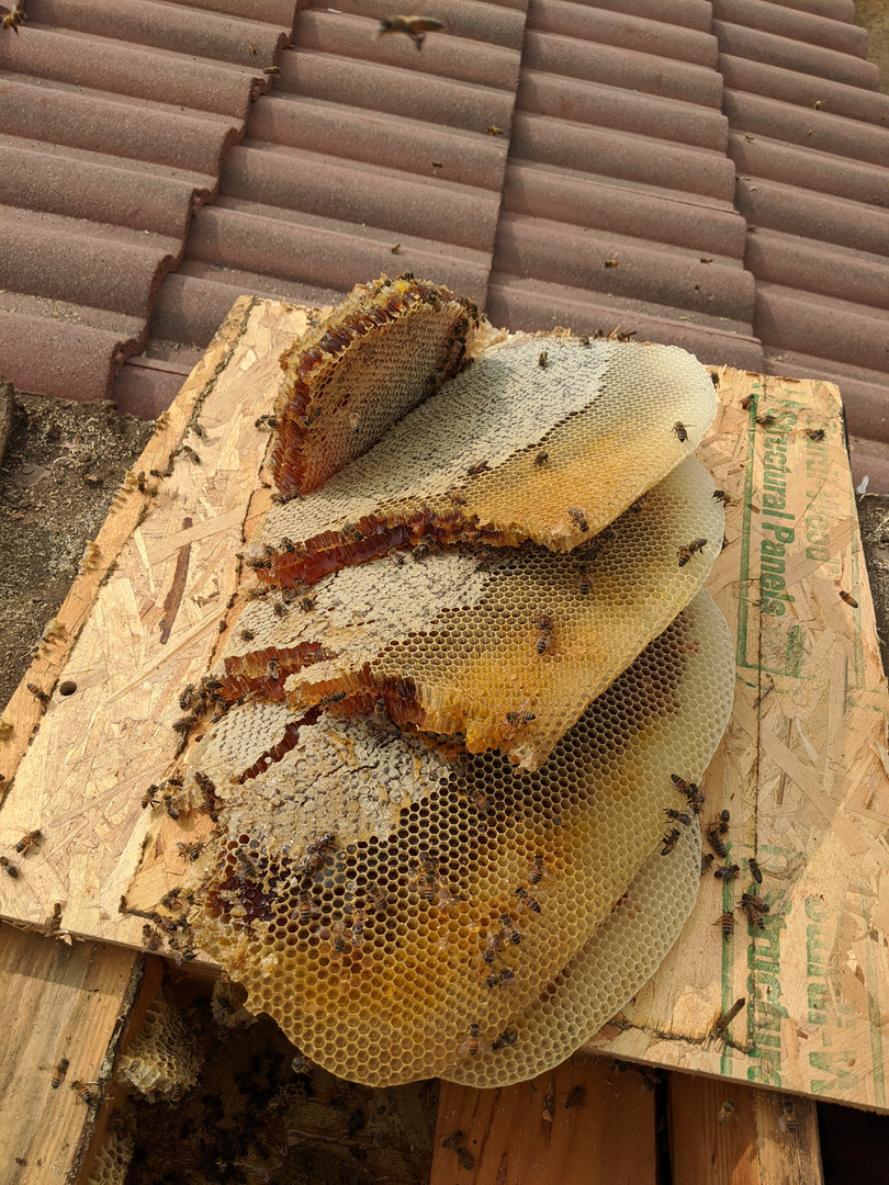 A roof over your bees.