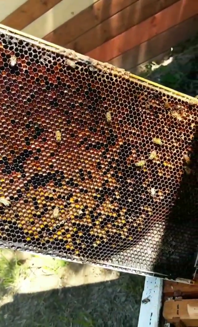 Pollen, Nectar, & Honey.
