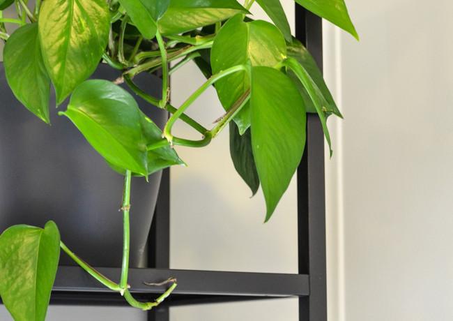 toimisto-keittio2-kasvi.jpg