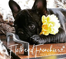 french bulldog rescue