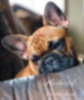 Love this mug💕 #frenchie #frenchbulldog