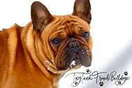 #tinytankfrenchbulldogs #flatheadfrenchies #medinasfrenchbulldogs #frenchbulldogpuppiesinmontana #montanafrenchbulldogbreeder #whitefishfrenchbulldogs #barkbox #akcfrenchbulldogpuppies #availablefrenchbulldogpuppies #championfrenchbulldogstuds #whitefish #bigsky #bozeman #bozemanfrenchbulldogs