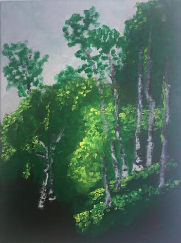Berkeley Trees #1