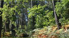 2018: 30 anos defendendo o bosque autóctono