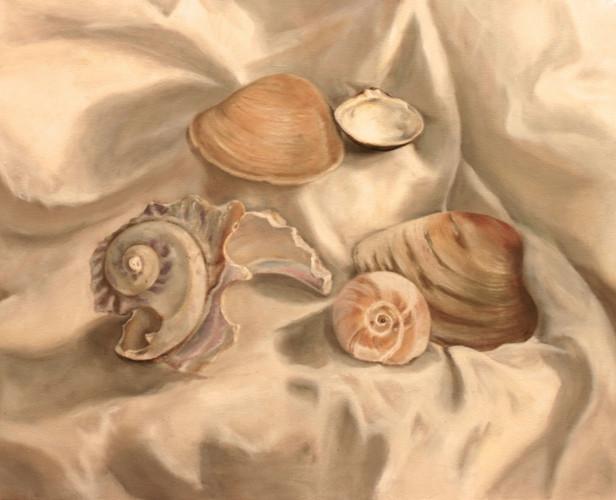 Seashell Study, 2015