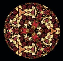 Kaleidoscope of petals