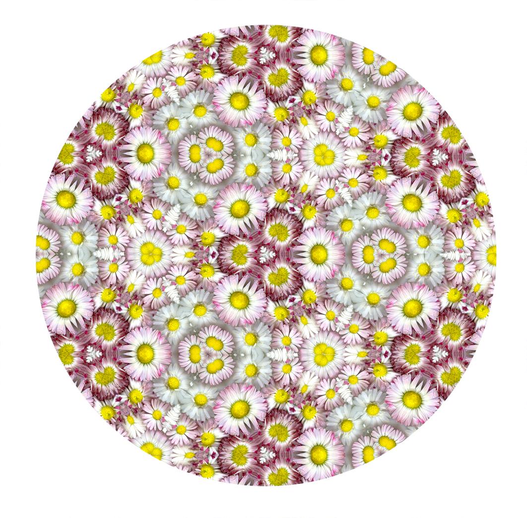 Daisy Kaleidoscope
