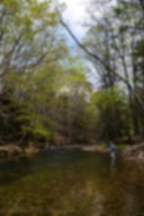SW Va. Mountain Stream-2.jpg