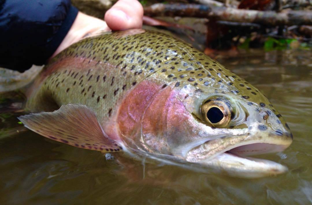 wild southwest Virginia rainbow