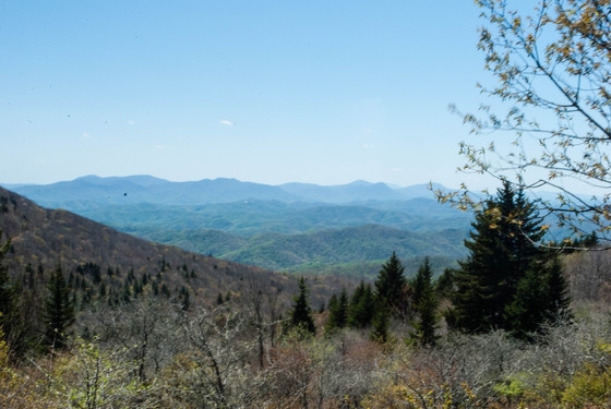 BLUE RIDGE DISCOVERY CENTER TAKES NATURALIST RALLY ONLINE