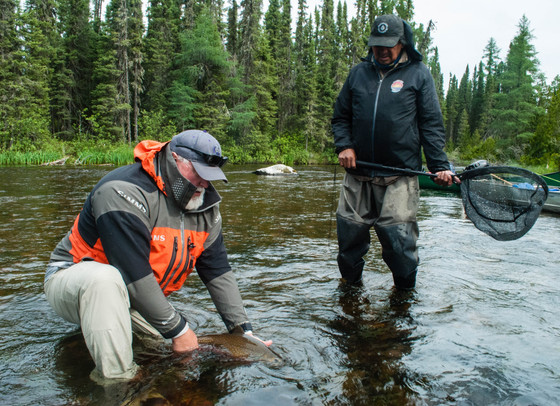 WILDERNESS BROOK TROUT IN ONTARIO'S NORTHWEST INTERIOR
