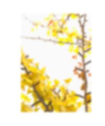 ginkgo_p29.jpg