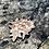 Thumbnail: Flower Mandala