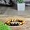 Thumbnail: Golden Crown