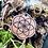 Thumbnail: New Flower of Life