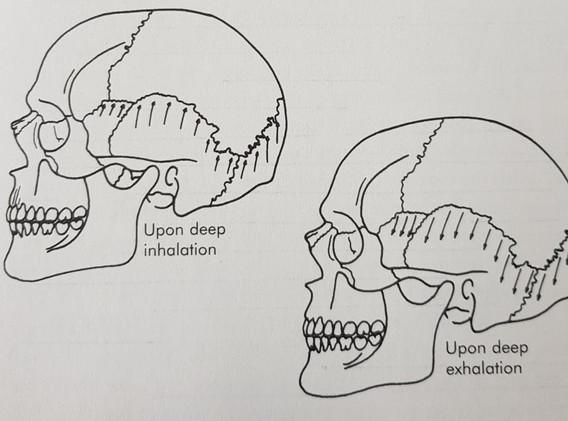 Opening the skull