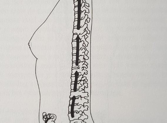 Spinal lengthening