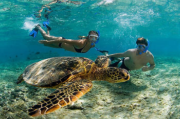Pedasi Sports Club offers a one stop shop for all Azuero and Pedasi tours, Pedasi fishing, Pedasi SCUBA diving, Pedasi Whale Watching, Canas Turtle Watching, Isla Iguana Snorkeling, and Rio Oria Horseback Riding.  The Fun starts Here!
