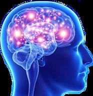investor brain.png