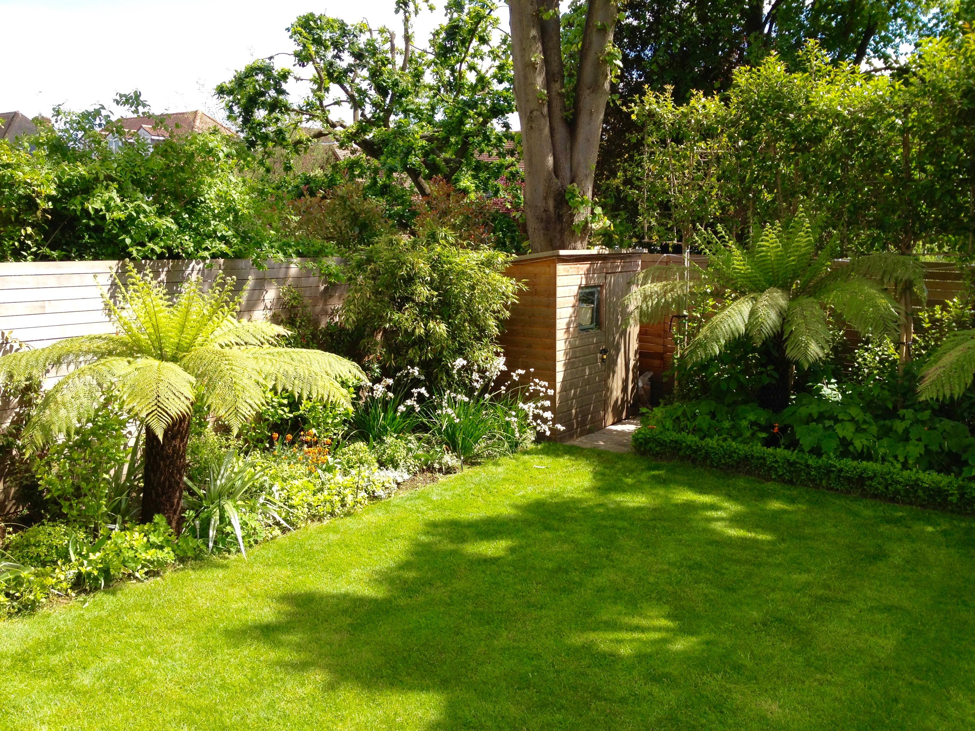 Dicksonia Garden