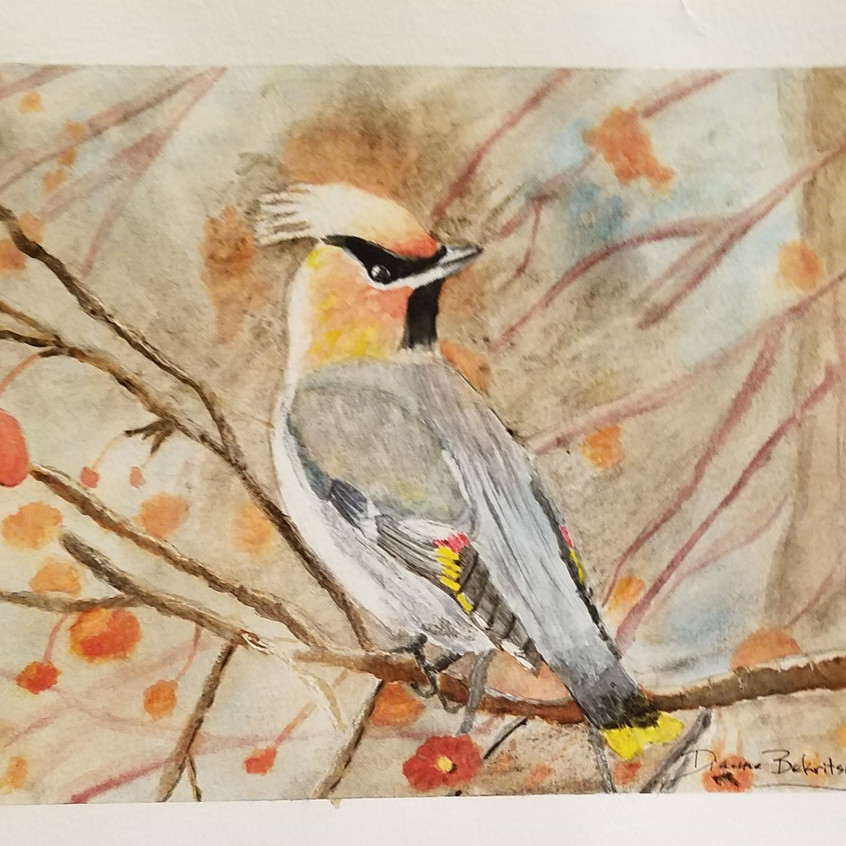 Cedar Waxwing watercolor_edited