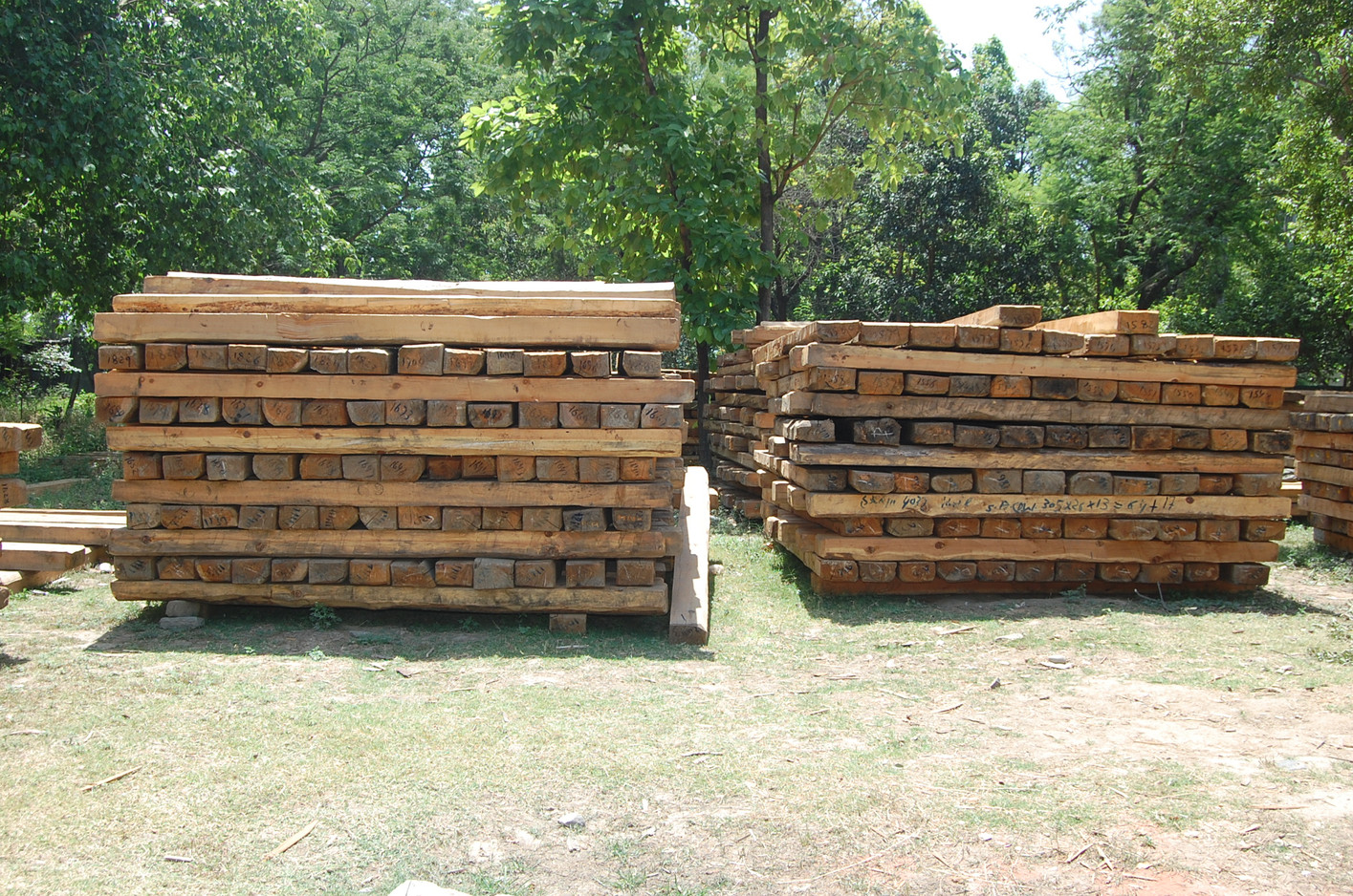 Timber Harvesting & Sale