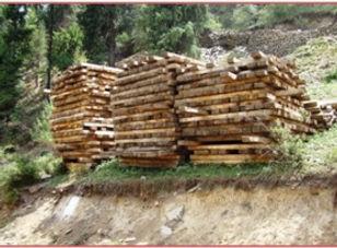 timber ext2.jpg