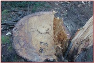 timber ext.jpg
