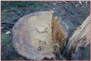 Fuel n Wood.jpg
