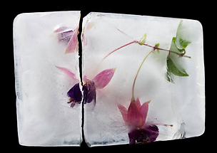 ice cracked w_flowers.png