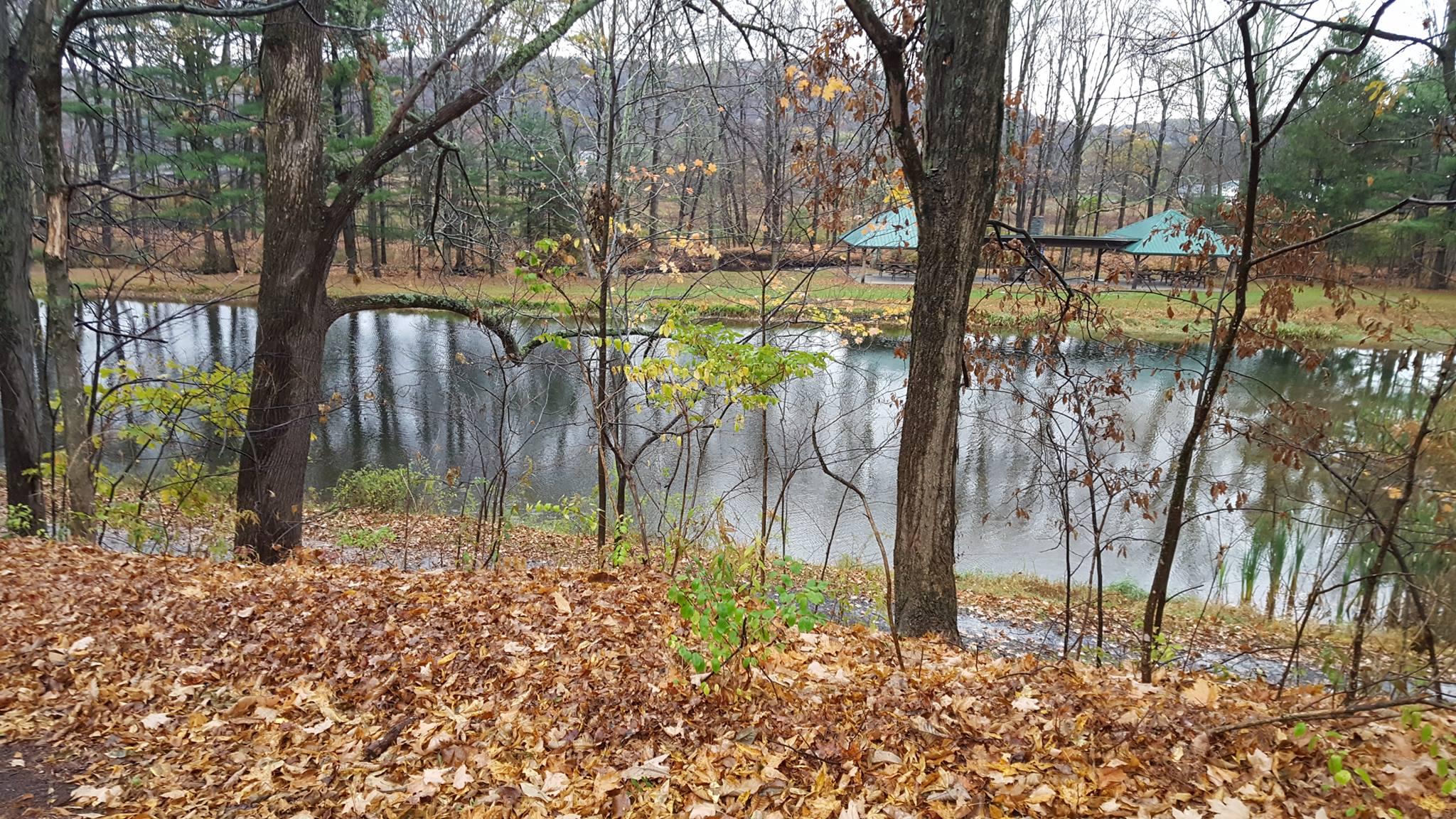 Camp-Back-Pond