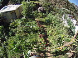 jardim organico