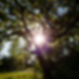 IMG_8622kop.jpg
