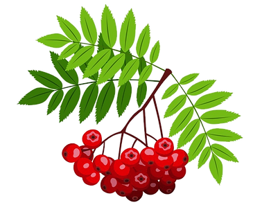 Rönnbär.png