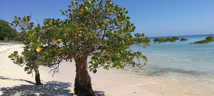 Mangrove Sumba