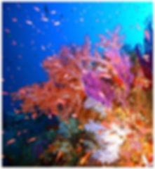 Plantation de coraux