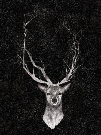 Cervo 1