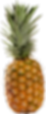 pineapple_PNG2746.png