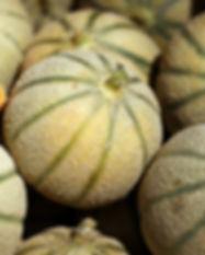 melon charentais Foodologic.jpg