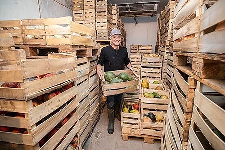 Courges producteur Angers.jpg
