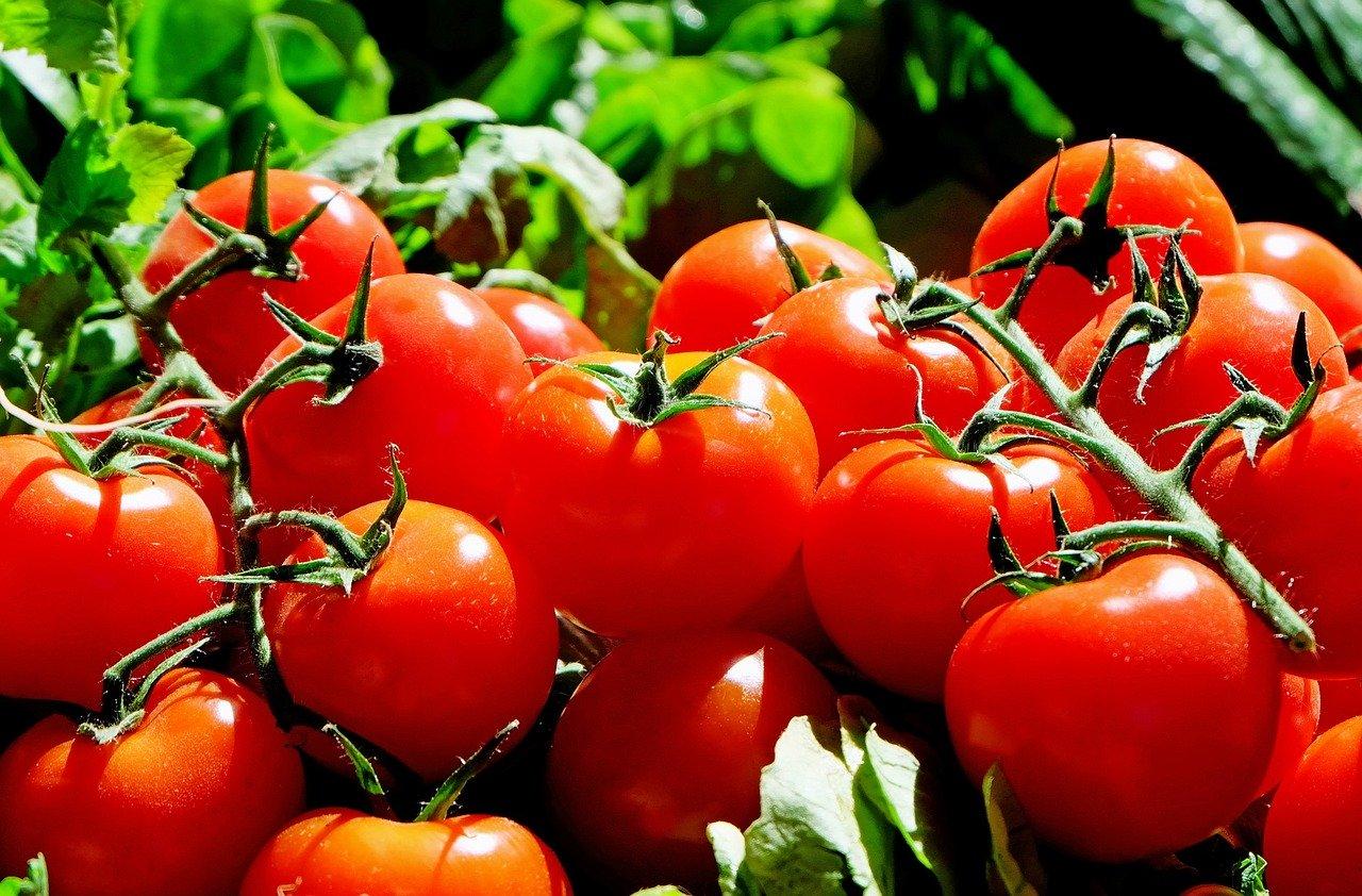 pomodoro rosso grappolo