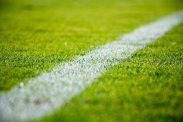 grass-2616911_1920.jpg