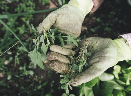 """Nasce l'App per trovare lavoro nel mondo dell'agricoltura: """"Restoincampo"""""""